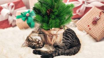 Ziemassvētki_kaķis_egle