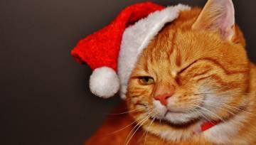 Ziemassvētki_kaķis