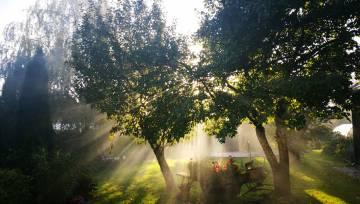 Saulains dārzs